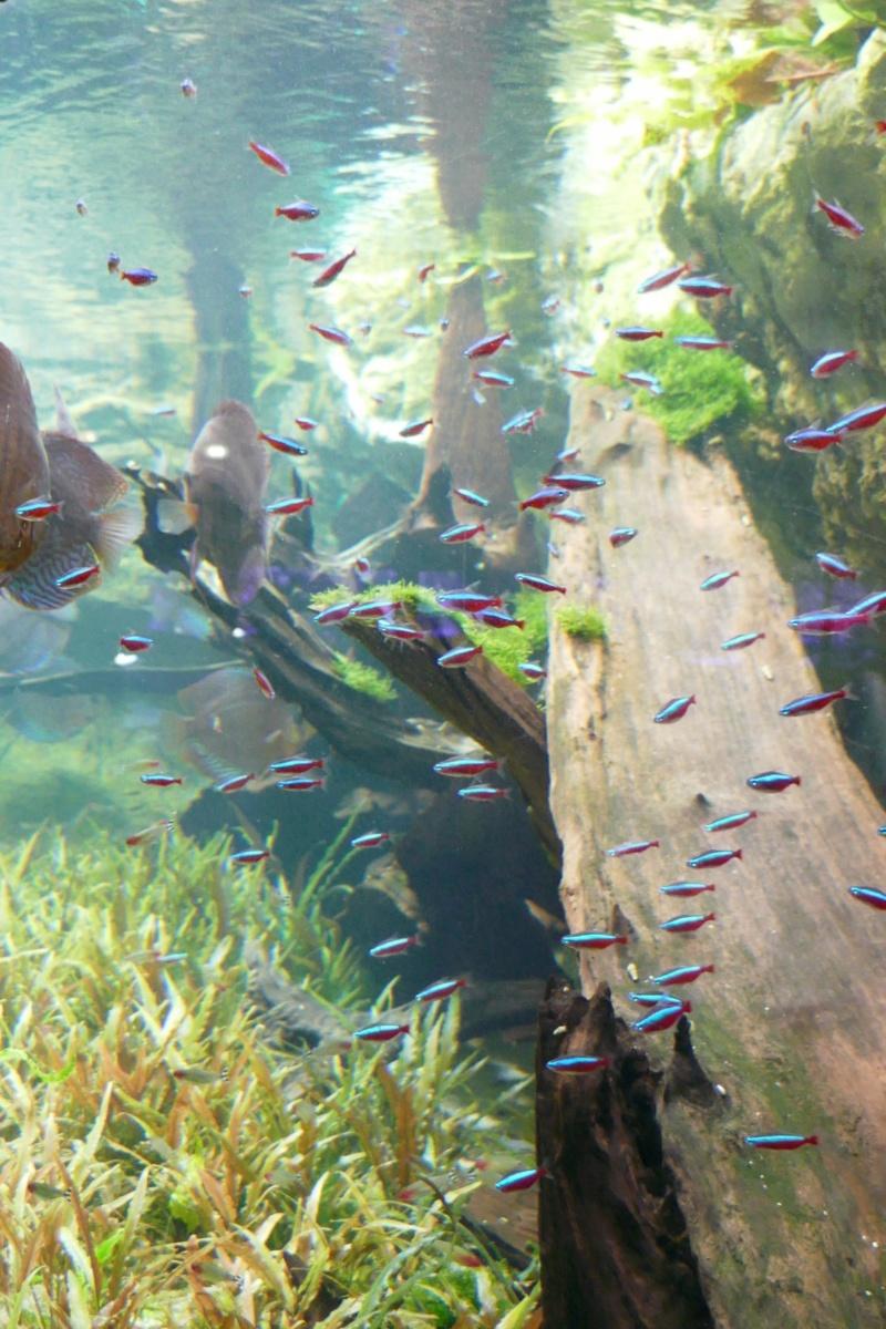 Aquarium de la porte dorée P1010613