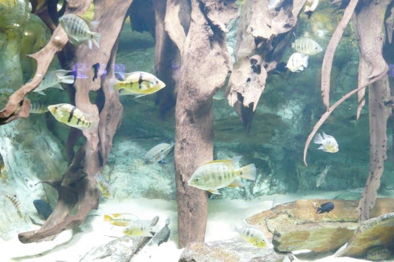 Aquarium de la porte dorée P1010614