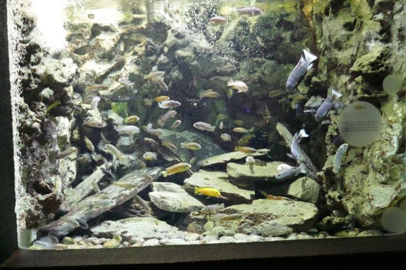 Aquarium de la porte dorée P1010615