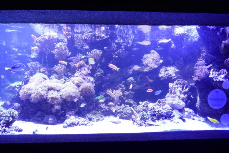 Aquarium de la porte dorée P1010617