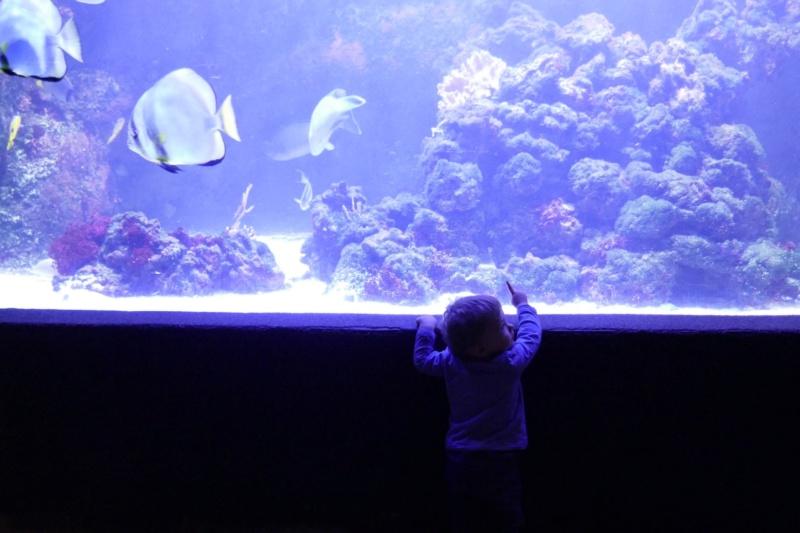 Aquarium de la porte dorée P1010618