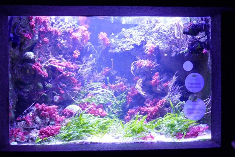 Aquarium de la porte dorée P1010619