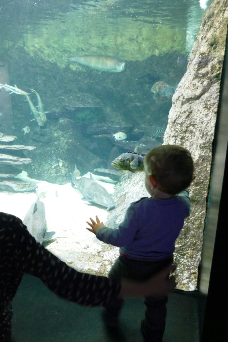 Aquarium de la porte dorée P1010620