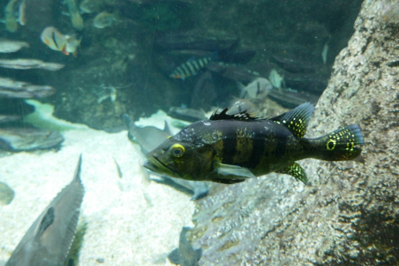 Aquarium de la porte dorée P1010621