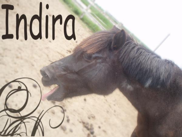 Vos plus belles grimaces de cheval et photos gag .... Diiidi11