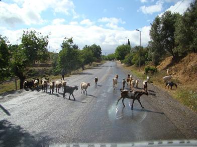 de retour du Maroc  9604 km de parcouru sans panne ( page 2 A_dsc120