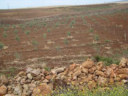 de retour du Maroc  9604 km de parcouru sans panne ( page 2 A_dsc122