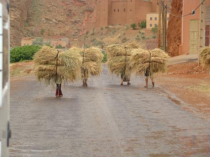 de retour du Maroc  9604 km de parcouru sans panne ( page 2 A_dsc125
