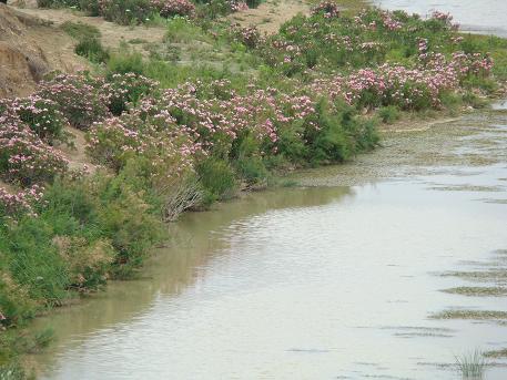 de retour du Maroc  9604 km de parcouru sans panne ( page 2 A_dsc126
