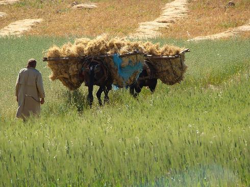 de retour du Maroc 9604 km sans panne       page 5 A_dsc202