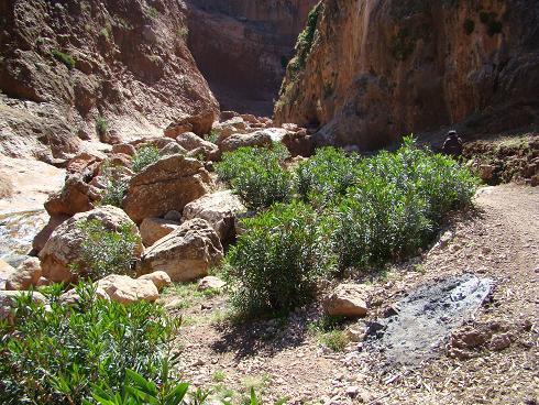 de retour du Maroc 9604 km sans panne       page 5 A_dsc210