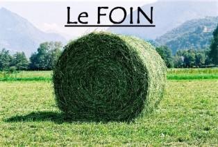 Le foin, base de l'alimentation Foinfi12