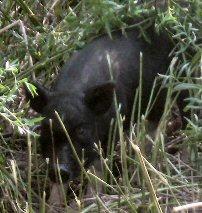 potbelly piglets Photos10
