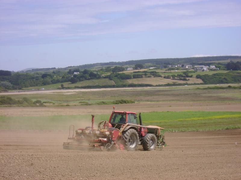 les légumes, du semis à la récolte Dsc03711
