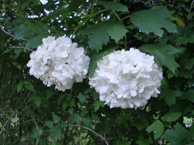 Je vous offre des fleurs.... Cimg1317