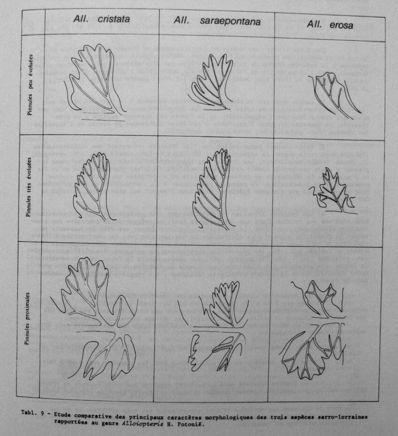 Spécimens à identifier (samples that need identification ) - Page 2 01410