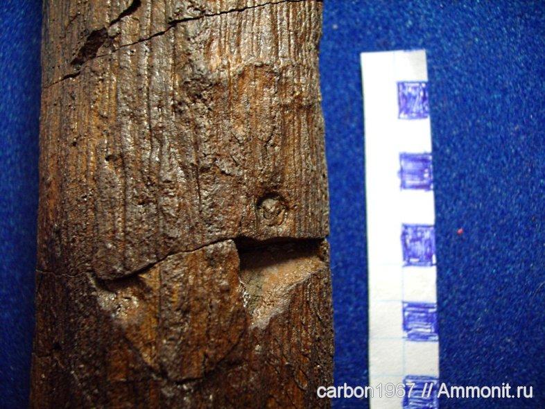 Traces de prédation  et perforations d 'insectes  12867010