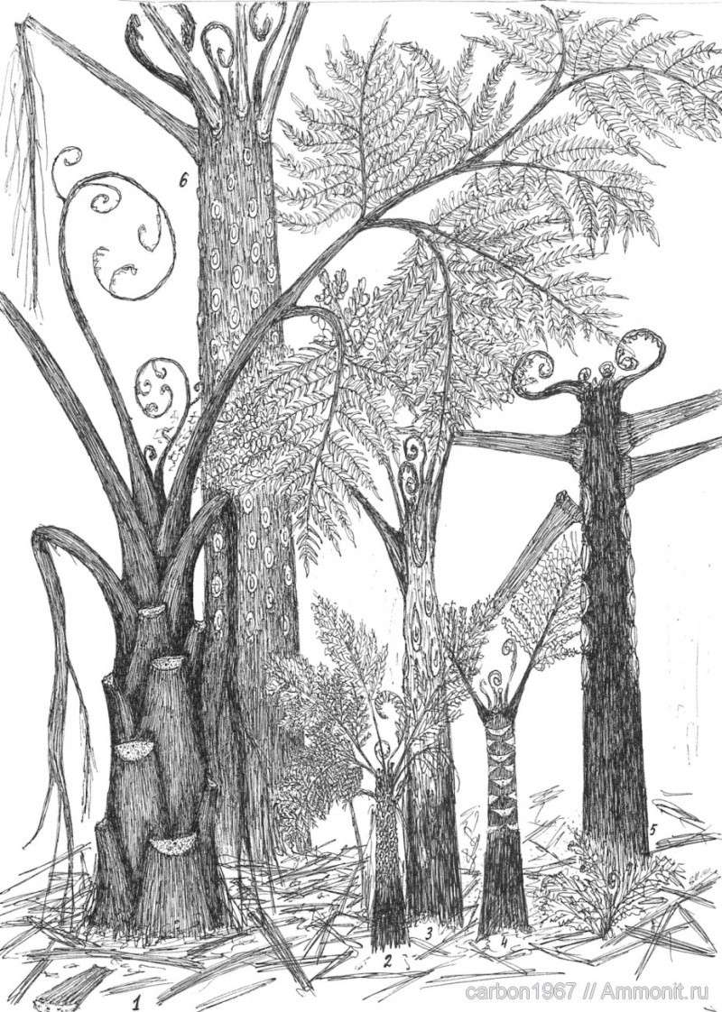 Neuropteris ovata Hoffmann . Cyclopteris Brongniart , 1830.  13010310