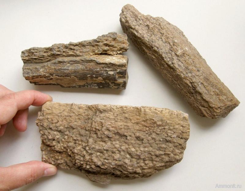 Structures et bois fossiles 13084910