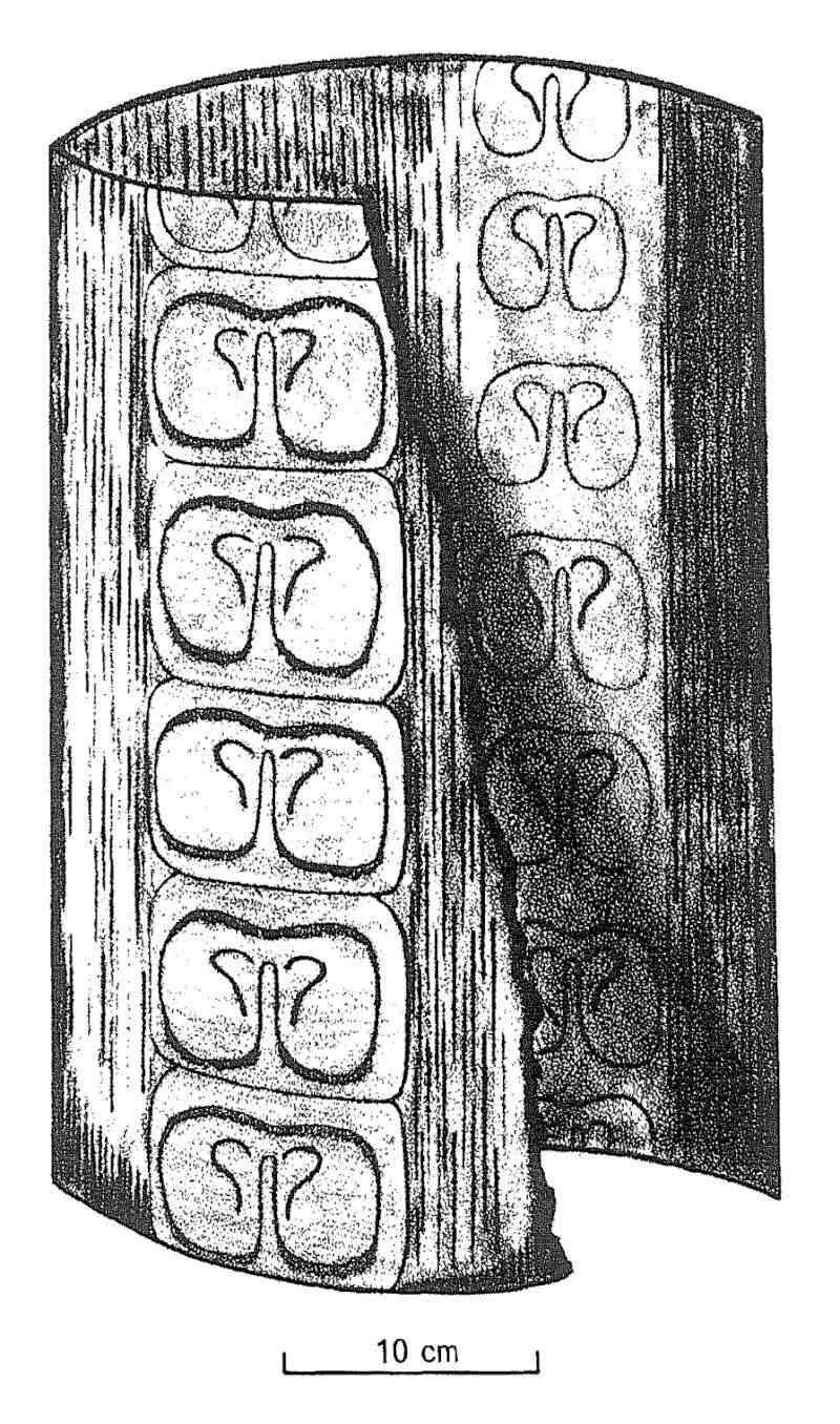 Megaphyton Artis , 1825 . Artiso10