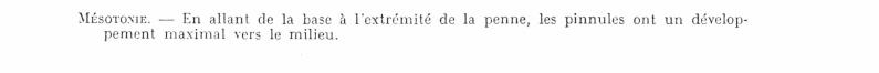 Pecopteris (Brongniart ) , Sternberg 1825. - Page 2 Bourea10