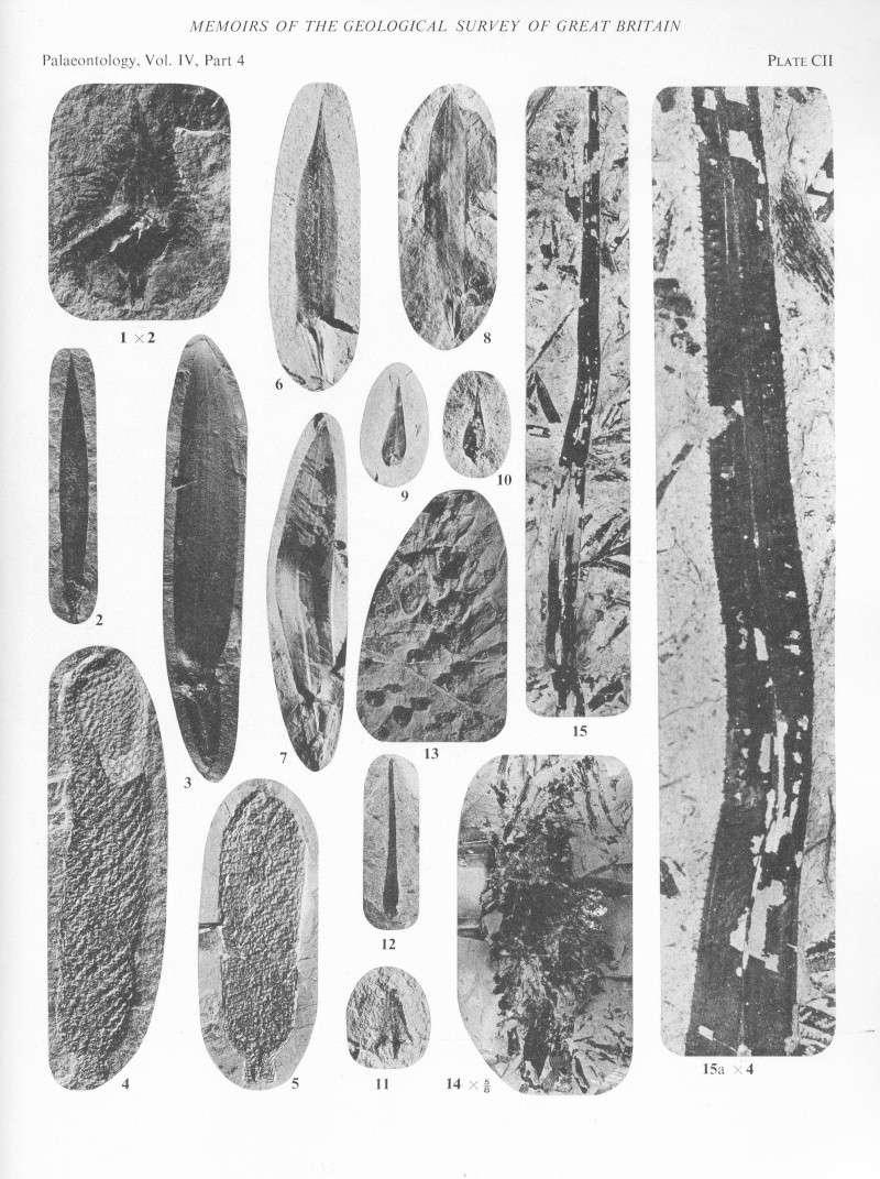 Sigillariostrobus  ou  Lepidostrobus  File2012