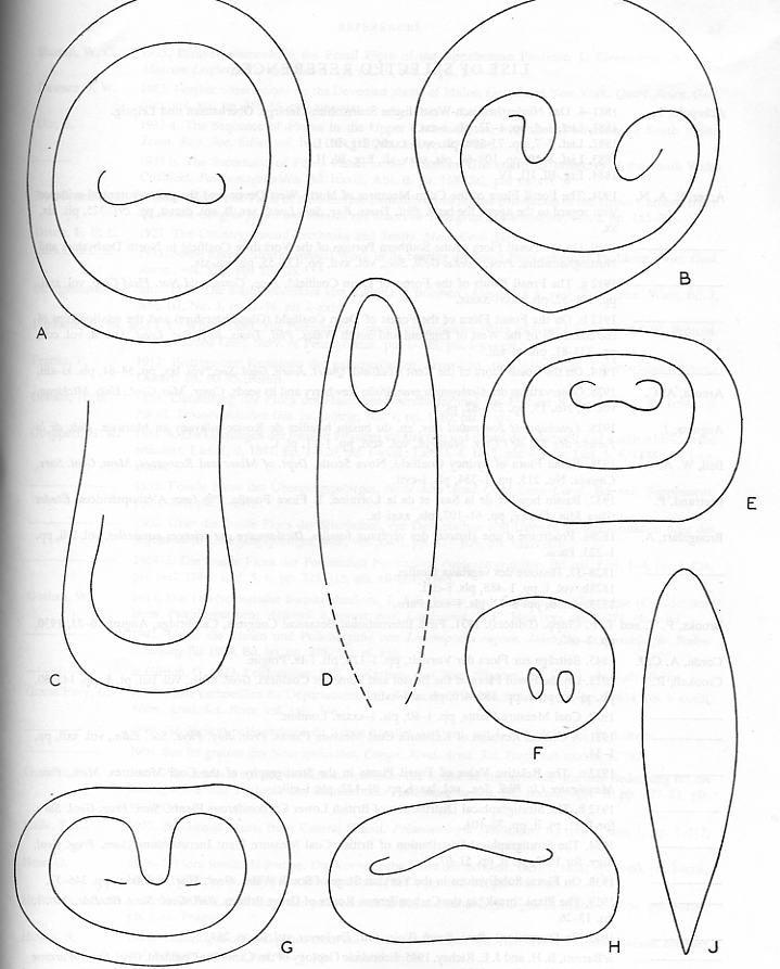 Ptychopteris Corda , 1845 . File2510