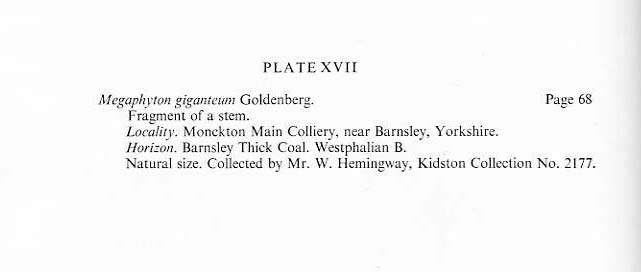 Megaphyton Artis , 1825 . File2712