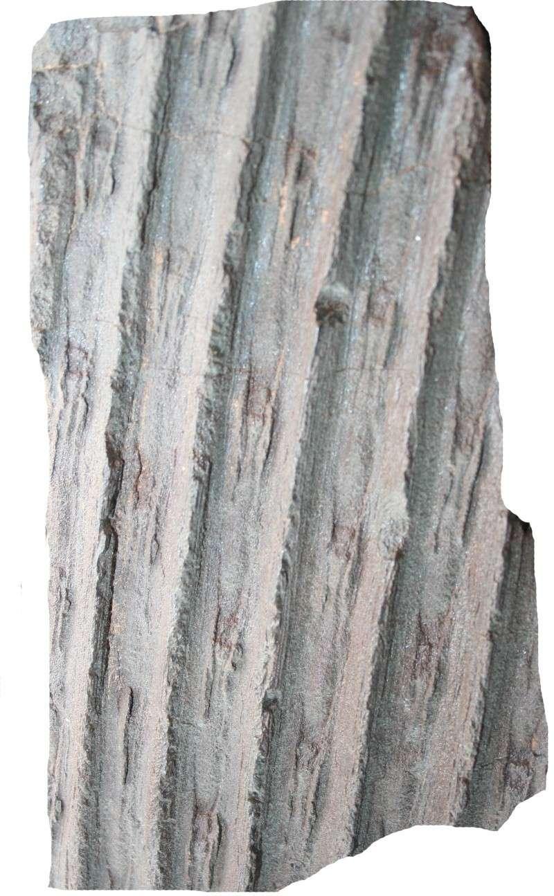 Grès (Sandstone) Schistes( Shale) types de conservation Img_5711