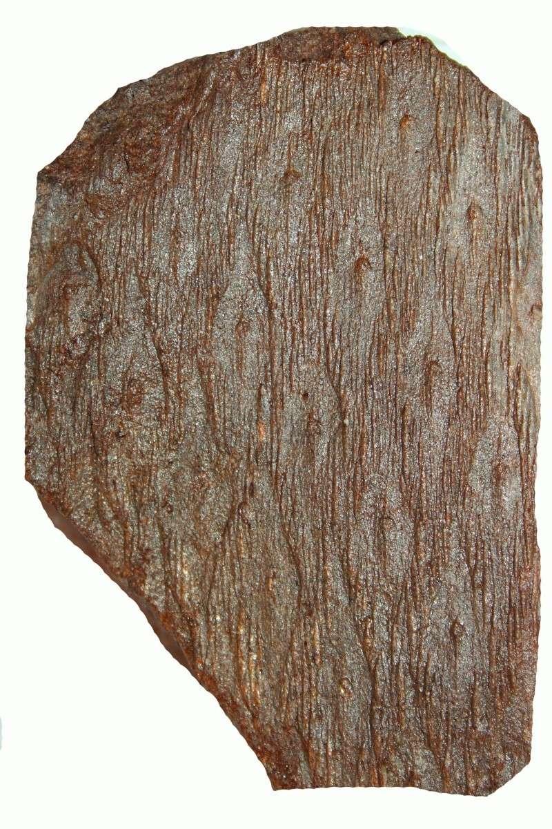 Grès (Sandstone) Schistes( Shale) types de conservation Img_6617
