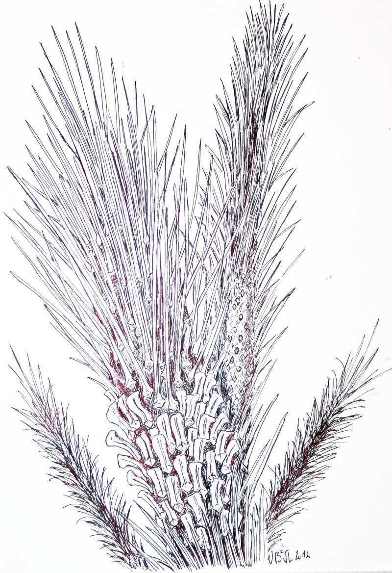 Asolanus Wood, 1860. Img_7911