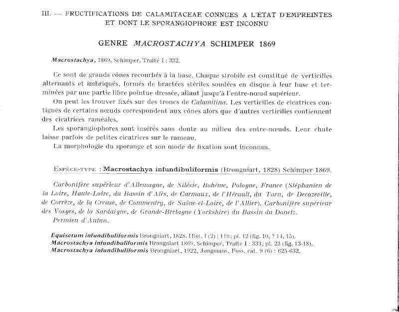 Calamites Schlotheim ,1820.  Annularia sternberg , 1822 .  - Page 2 P363_010