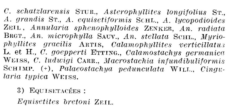 Calamites Schlotheim ,1820.  Annularia sternberg , 1822 .  - Page 3 P_241_12
