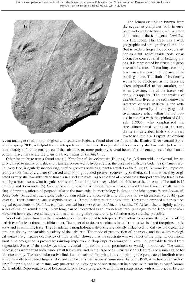 Pistes d 'arthropodes et de vers Specia11