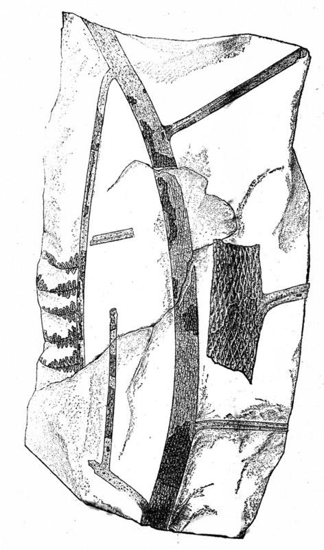 Lyginopteris Potonié , 1897 .  Spheno11