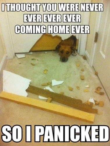 Le bêtisier de nos chiens - Page 7 Loldog10
