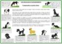 signaux - Travaux sur les signaux d'apaisement - Merci pour vos avis - Page 2 Signau15