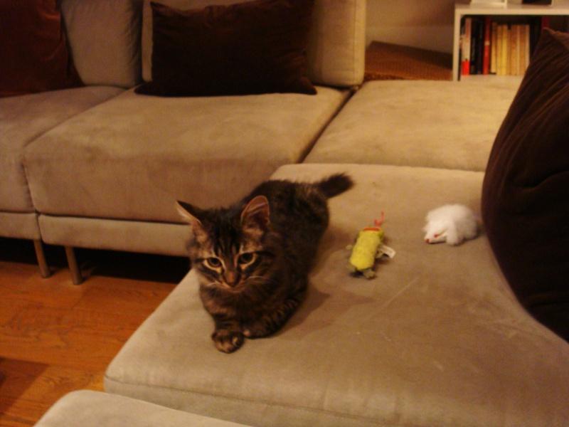 Un pôv'tit chat très malheureux....ou quand DALES = YODA Dsc00410