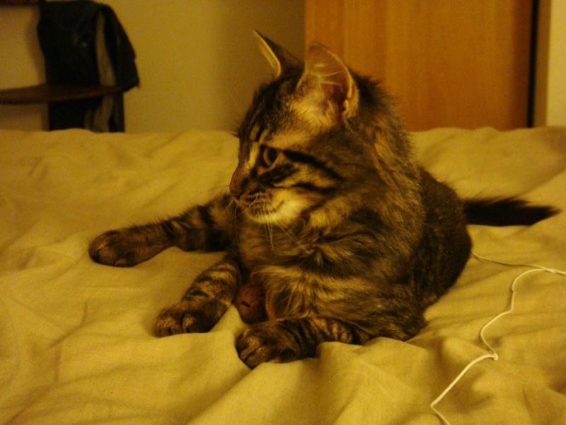 Un pôv'tit chat très malheureux....ou quand DALES = YODA Dsc00411