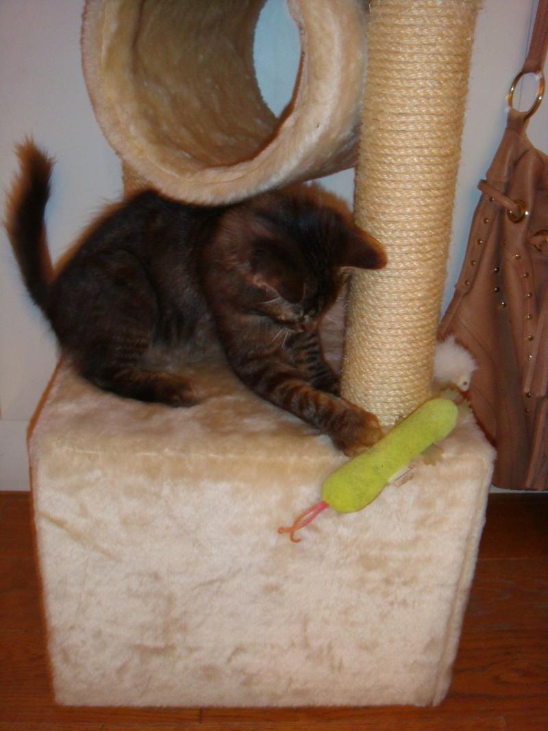 Un pôv'tit chat très malheureux....ou quand DALES = YODA Dsc00412