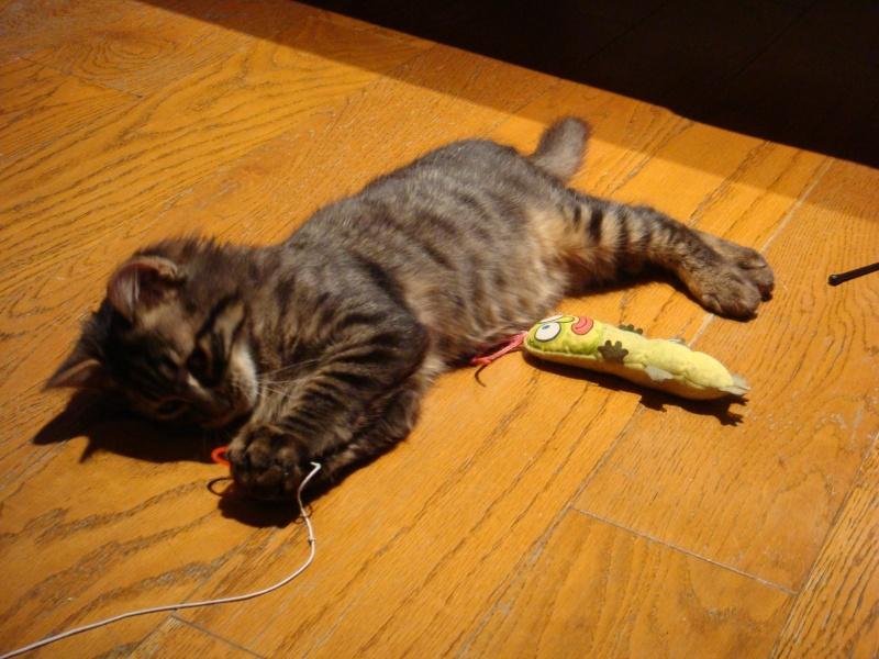 Un pôv'tit chat très malheureux....ou quand DALES = YODA Dsc00414