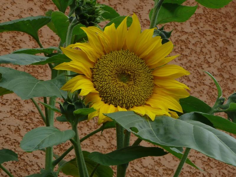 mon jardin de juillet 2011_010