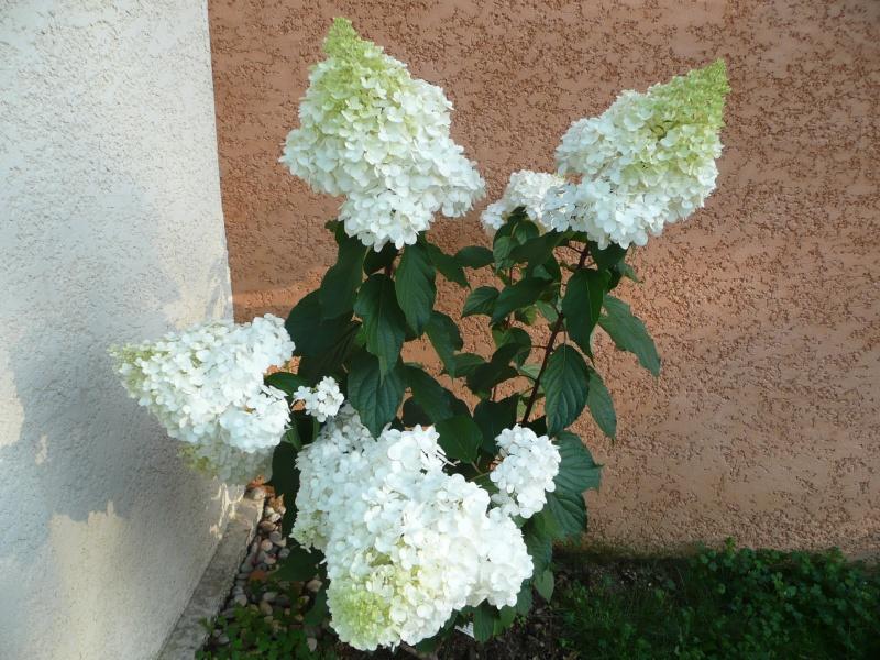 mon jardin de juillet 2011_076