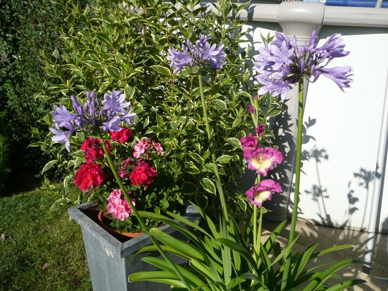 mon jardin de juillet Les_ag11