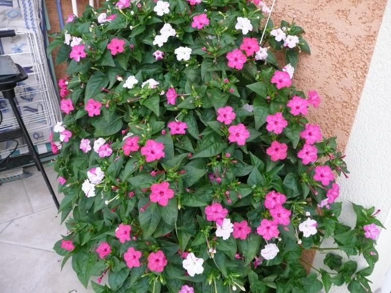 mon jardin de juillet Les_be10