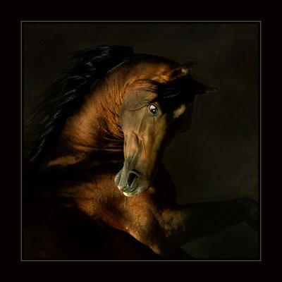 Cavalo: Sinais de Saúde e Doença 410