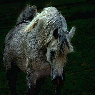 Cavalo: Sinais de Saúde e Doença 510