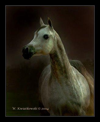Cavalo: Sinais de Saúde e Doença 610