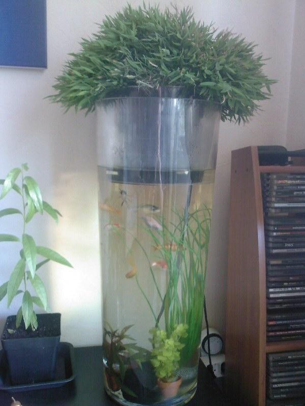 aquaponie Bambou10
