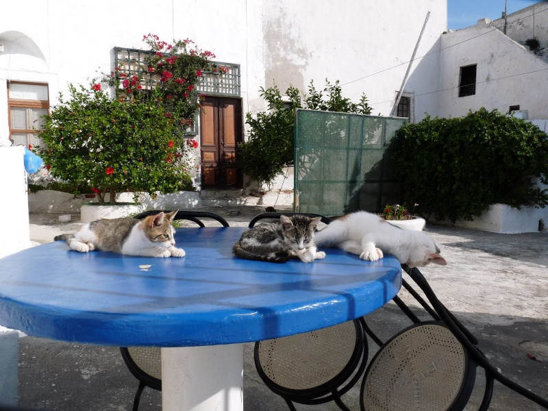 Les Chats De Santorin 15610